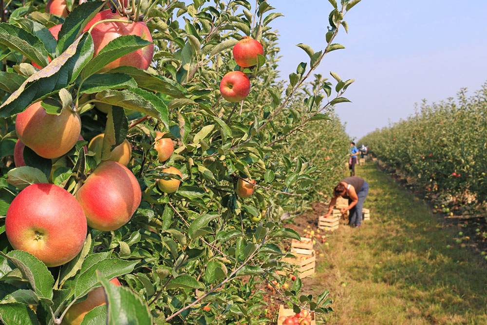 la protezione degli alberi da frutto