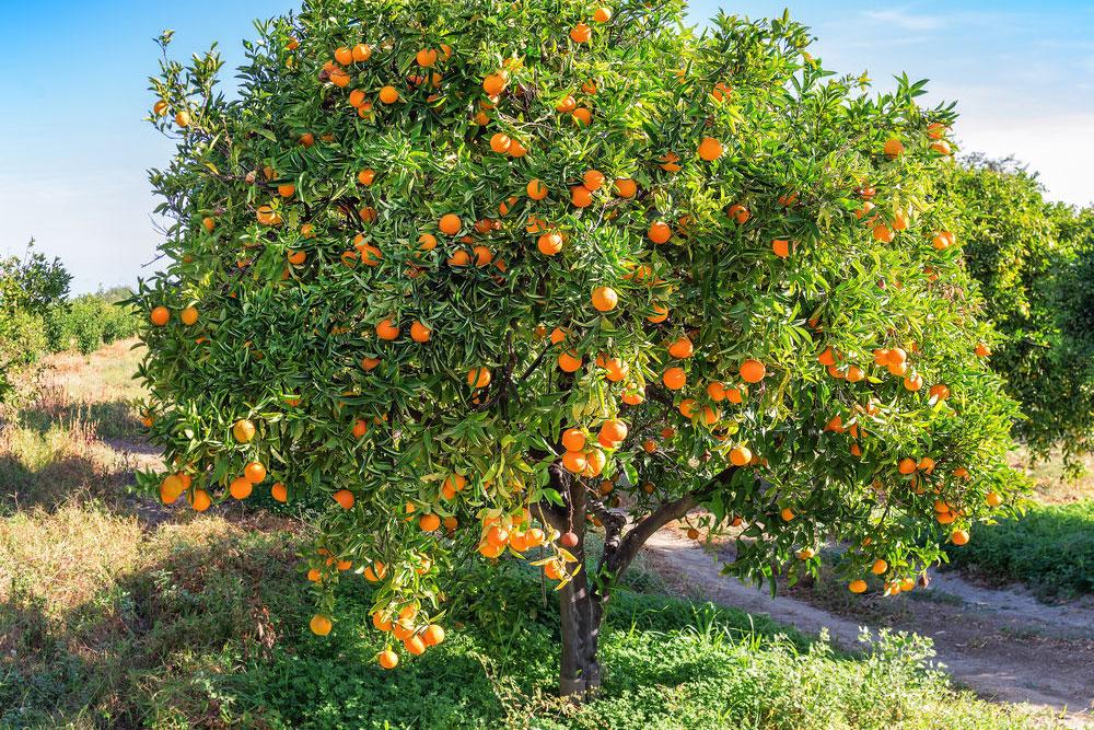 protezione dei frutteti