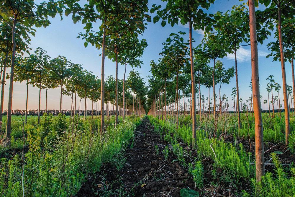 silvicoltura per riaqualificazione dei boschi