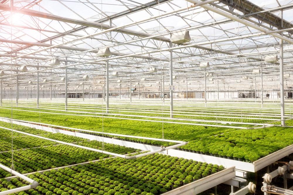 Sistemi di ventilazione per agricoltura e paesaggistica