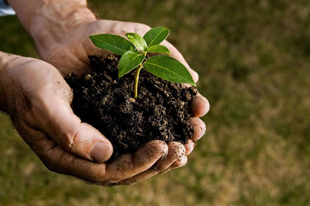 proteggere le piante