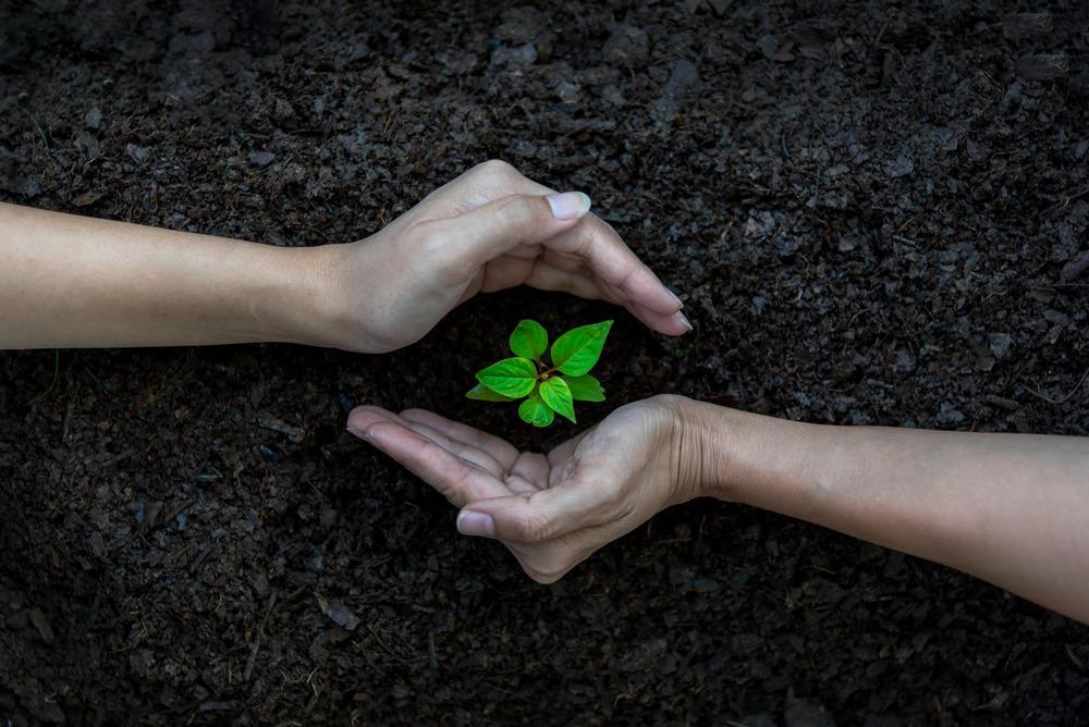 proteggere le piante giovani