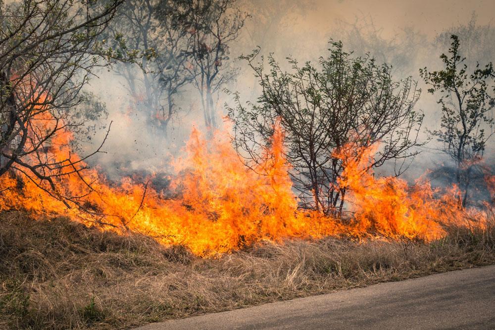 combustione controllata silvicoltura
