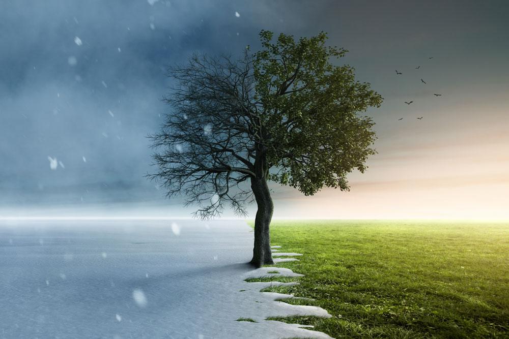 alberi da piantare alla fine dell'inverno