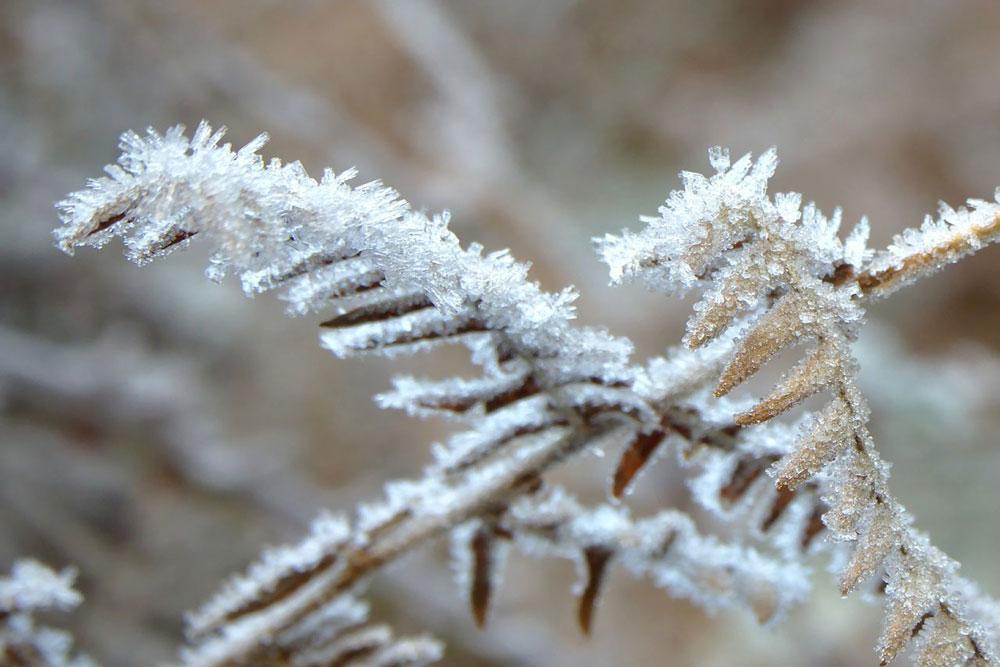 Piante resistenti al freddo