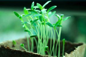 shelter per piante