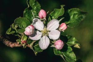 Volete capire come riconoscere gli alberi da frutto? Sappiate che non è facile, soprattutto le prime volte. Ecco le informazioni che vi aiuteranno
