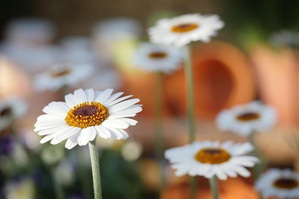 proteggere le piante dal caldo