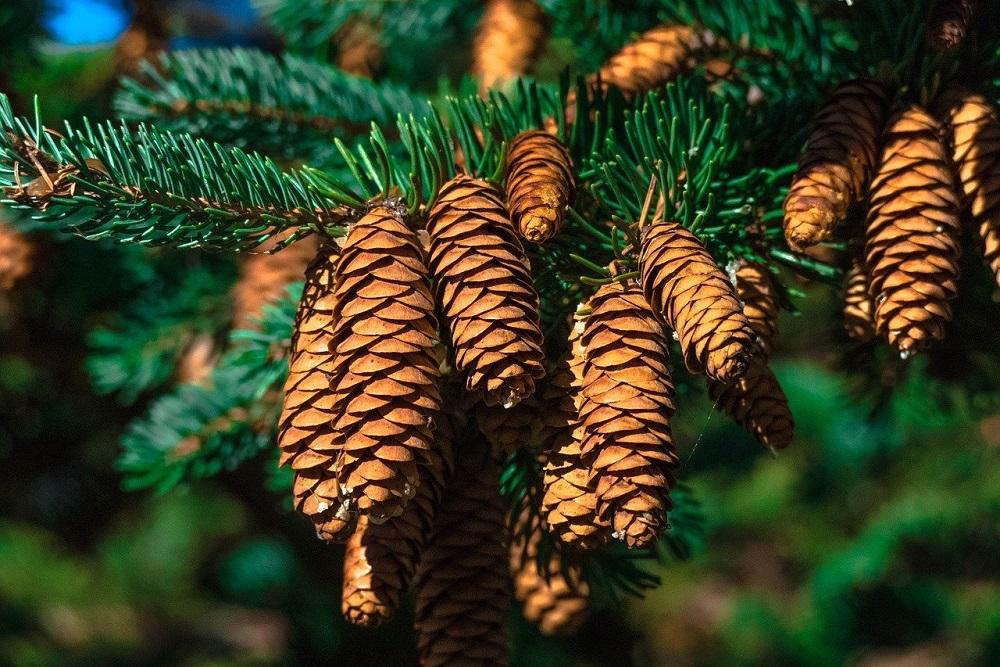 alberi più resistenti al freddo