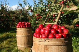 cura del frutteto