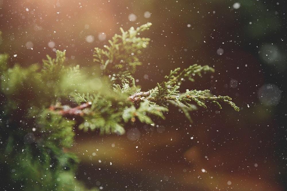 Perché piantare gli alberi in inverno? | Tubex Italia