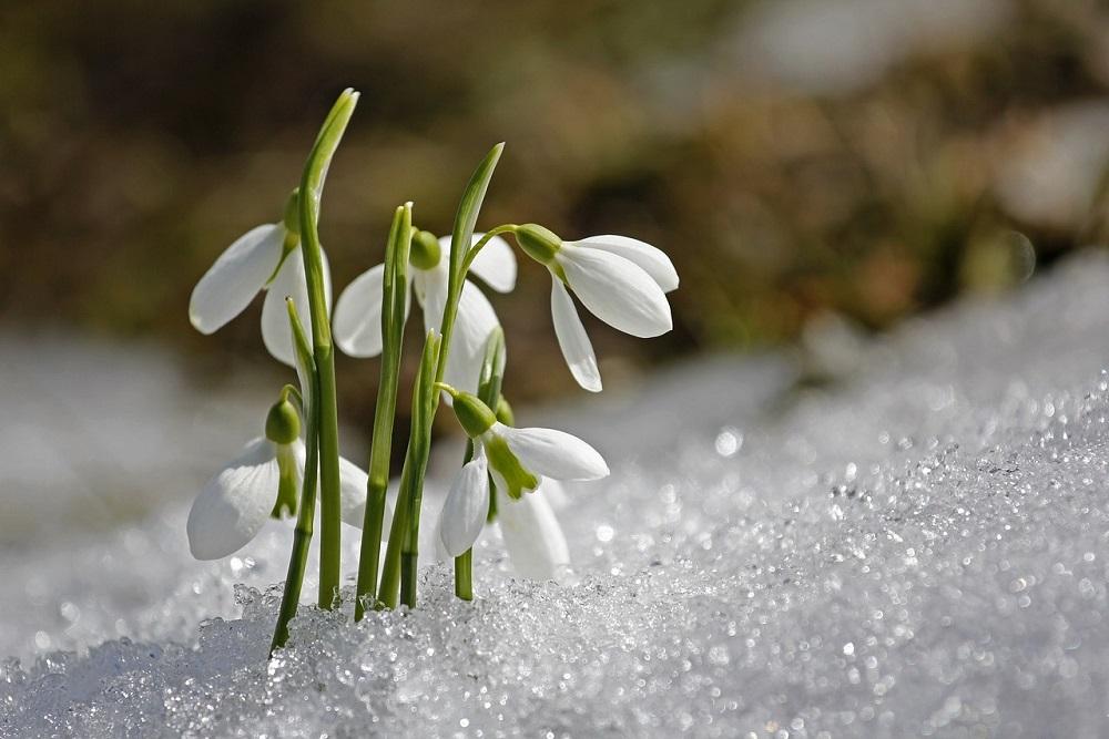 Fiori invernali: quali sono e come curarli | Tubex Italia