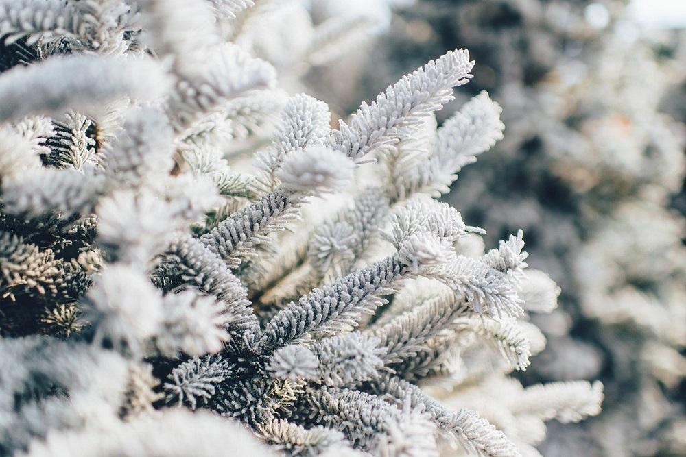 La protezione dei giovani alberi in inverno | Tubex Italia