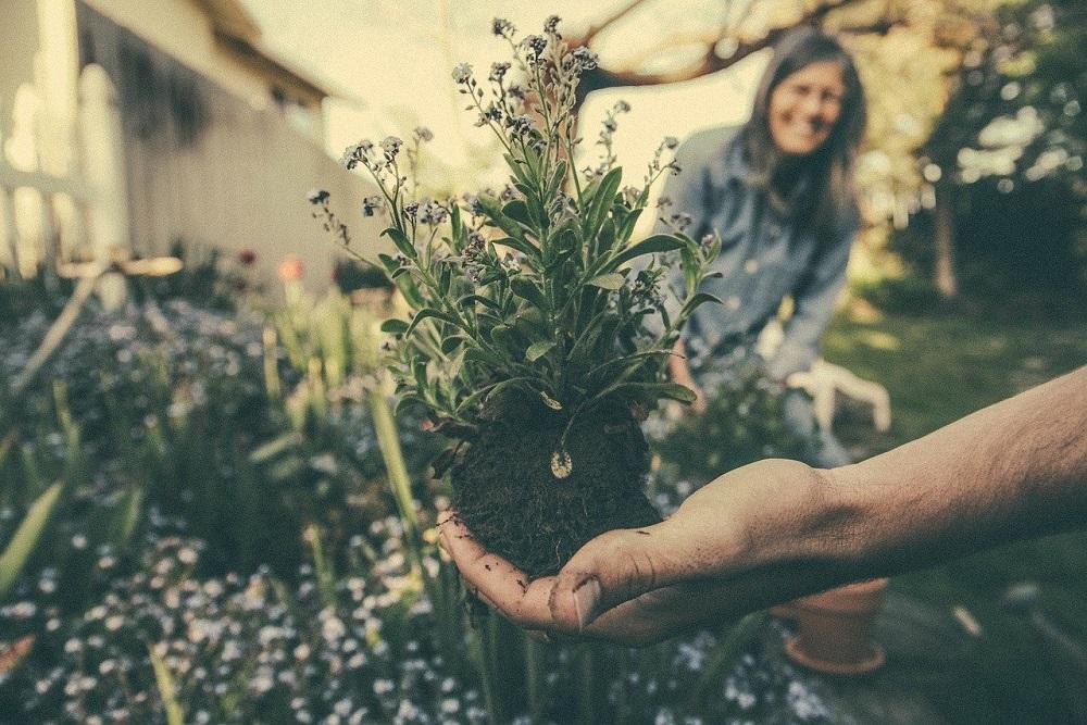 Clima ideale per l'attecchimento della pianta | Tubex Italia