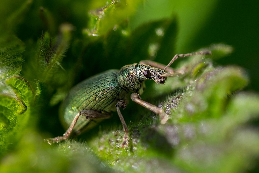 Piretro: come si usa l'insetticida naturale? | Tubex Italia