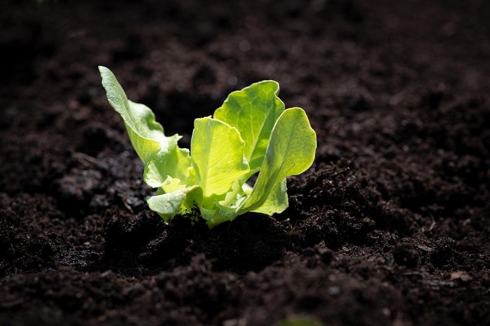 Perché avere un orto? Tre buone ragioni | Tubex Italia