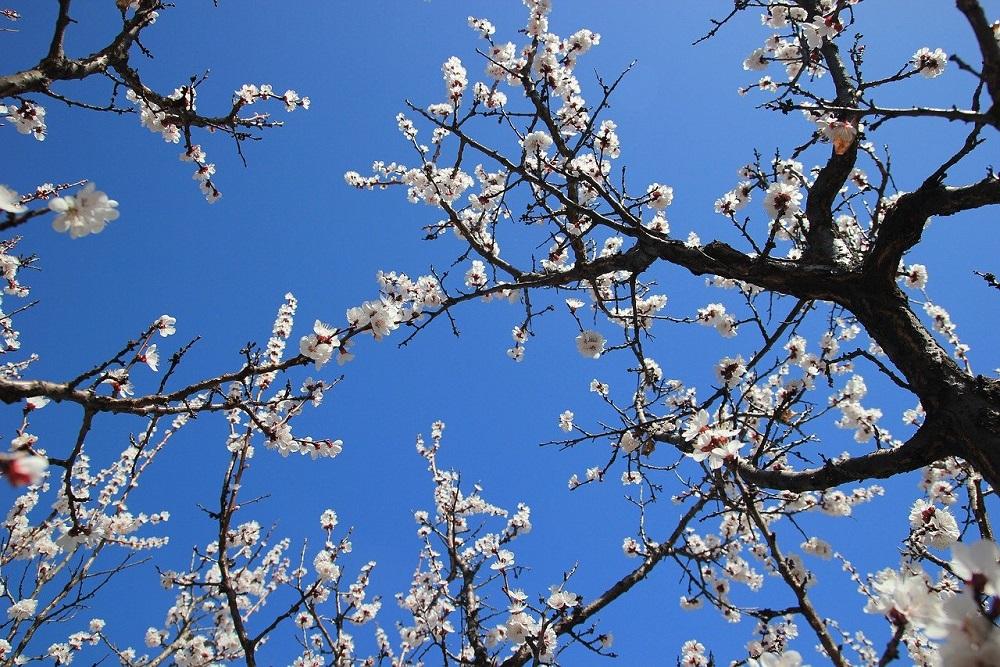 Albero di albicocche: come curarlo al meglio | Tubex Italia