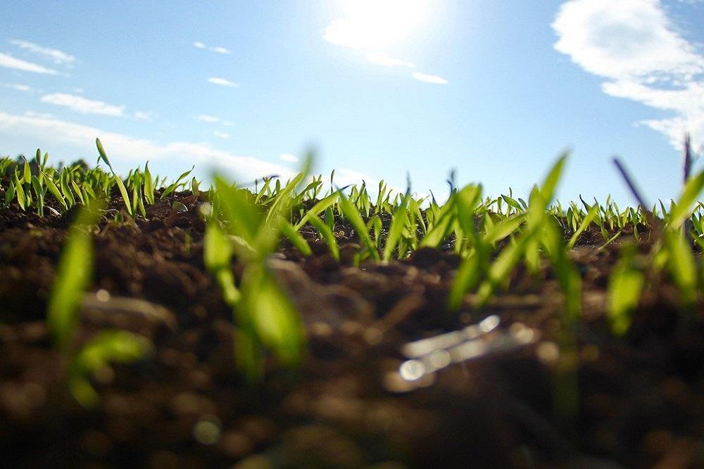 Cosa piantare a febbraio? | Tubex Italia