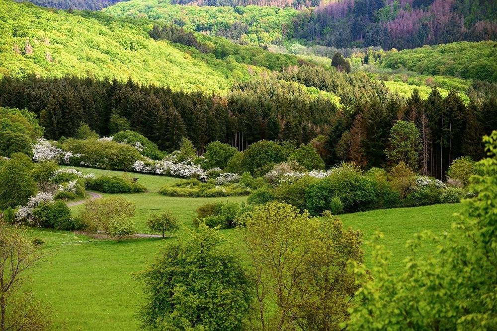 Gli shelter per la silvicoltura | Tubex Italia