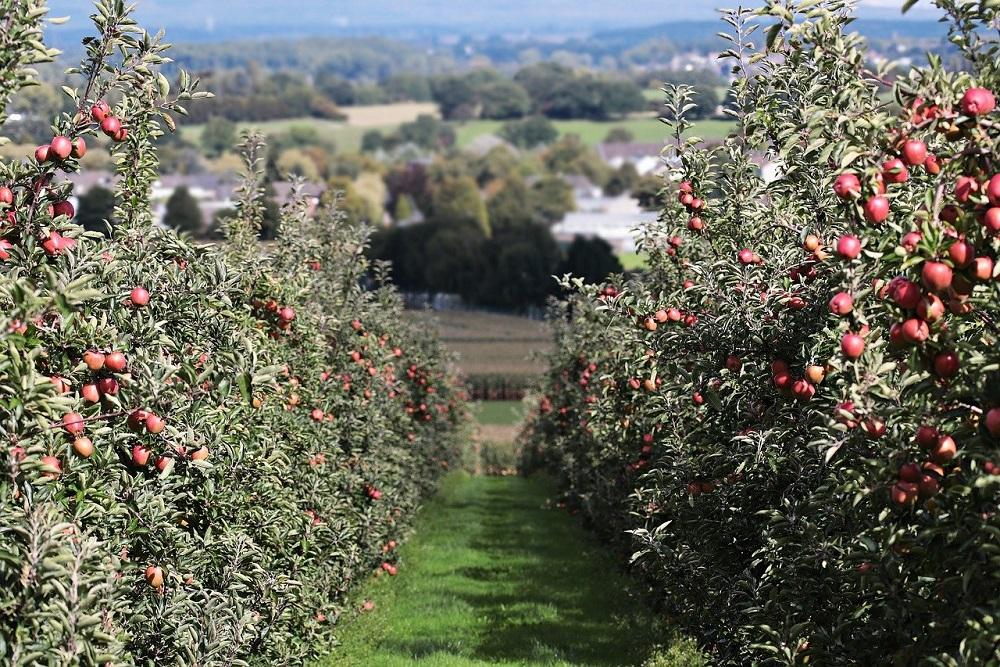 Protezione per alberi da frutto: Tubex FruitWrap | Tubex Italia