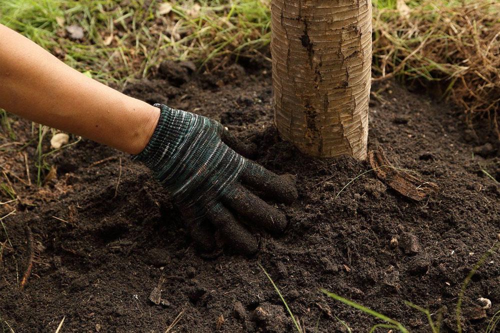 piantare un albero evitando lo stress da trapianto