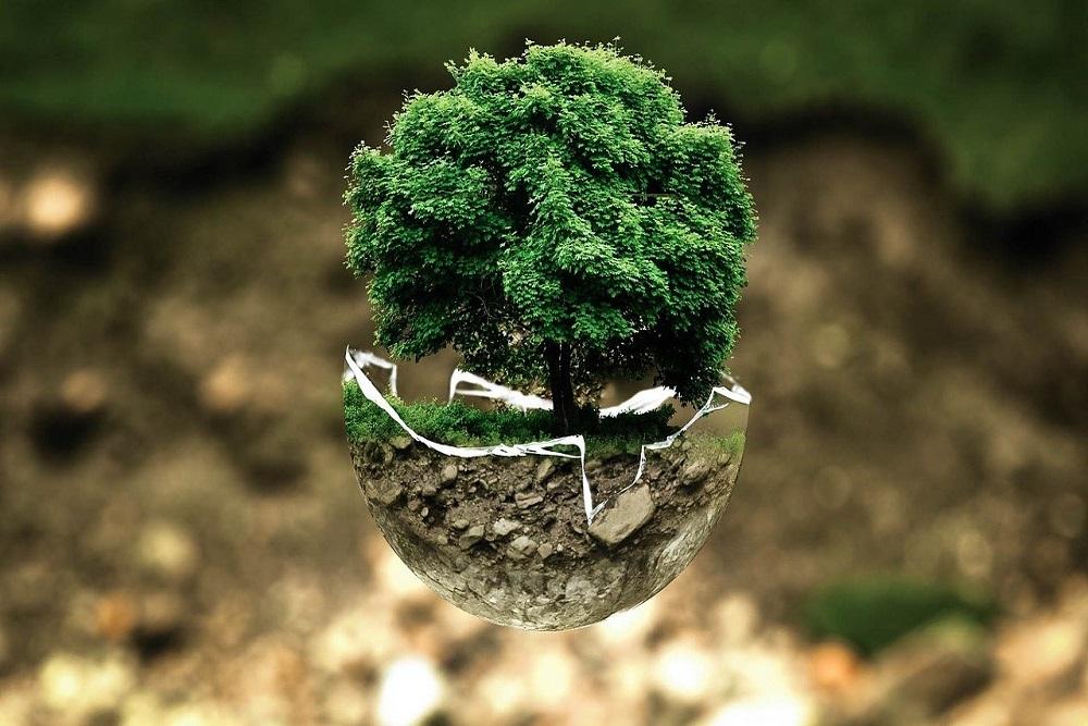 piantare un albero e proteggerlo con gli shelter tubex