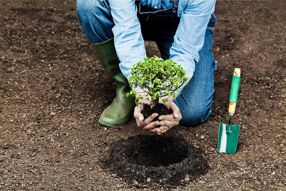 inzaffardatura e messa a dimora delle piante