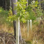 tubex ventex per la protezione delle piante